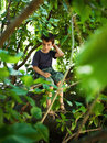 Carefree child portrait climbed in a tree and hiding Royalty Free Stock Image