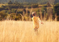 Carefree little boy run across high golden grass Royalty Free Stock Photo