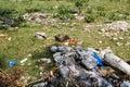 Careless garbage disposal in park Stock Image