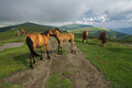 The caress of the horses balkan mountains bulgaria picture was taken in Royalty Free Stock Photos