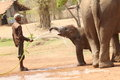 Caretaker giving water to baby elephant asian playing and enjoying this image was capture in tadoba andheri tiger reserve Stock Photography