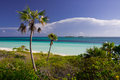 Caribbean beach in cuba cayo guillermo with palms Stock Photography