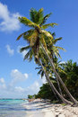 Caribbean Beach, Dominican Republic Royalty Free Stock Photography