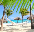 Caribbean beach hammock and palm trees Stock Photos
