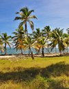 Caribbean beach with a lot of palms and white sand Royalty Free Stock Photo