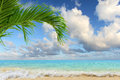Caribbean beach with palm tree clear waters and clouds in background Royalty Free Stock Photos