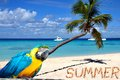 Caribbean beach parrot summer in sand with palm tree and word Stock Images