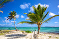 Caribbean coastline with palm trees dominican republic Stock Photo