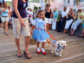 Caribbean Dog Parade Royalty Free Stock Photos