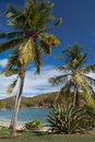 Caribbean harbor surrounded by coconut palm trees blowing in the wind Stock Image