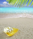Caribbean pearl on shell white sand beach tropical Royalty Free Stock Photo
