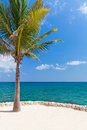 Caribbean sea with lonely palm tree Royalty Free Stock Images