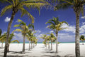 Caribbean Shade - Row of Palm Trees Leading to Sea Royalty Free Stock Photography