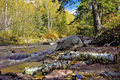 Caribou creek, fallen birch branch, autumn Stock Image