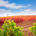 Carinena and Paniza vineyards in autumn red Zaragoza Spain Royalty Free Stock Photos