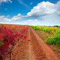 Carinena and Paniza vineyards in autumn red Zaragoza Spain Royalty Free Stock Image