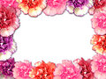 Carnation border Royalty Free Stock Photo