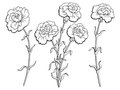 Carnation flower graphic black white isolated sketch illustration Royalty Free Stock Photo