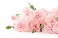 Carnation flowers Royalty Free Stock Photo