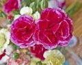 Carnation flowers closeup Royalty Free Stock Photo