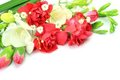 Carnation and freesia Stock Photos