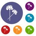 Carnation icons set