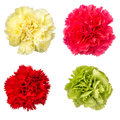 Carnation red pink green and yellow isolated on white Royalty Free Stock Photos