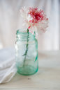 Carnation white and red in a vase Stock Images