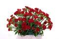 Carnations Stock Image