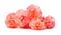 Carnations Royalty Free Stock Photo