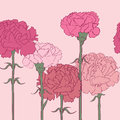Carnations pattern pink linear over hand drawn cartoon illustration with beautiful flowers Royalty Free Stock Photo