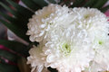 Carnations spring bouquet white bouquet Royalty Free Stock Image