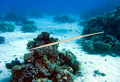 Carnetfish in red sea, Fistularia commersonii Stock Photography
