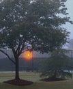 Carolina Fog Vertical Royalty Free Stock Photo