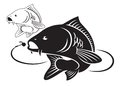 Carp fish the figure shows the Royalty Free Stock Image