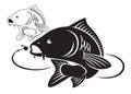 Carp fish Royalty Free Stock Photo