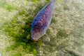 Carp, pond, fish, Koy Royalty Free Stock Photo
