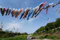 Carp streamer Royalty Free Stock Photo
