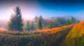 Carpathian dream panorama of beautiful sunrise in a misty valley forest hill covered with magic fog Royalty Free Stock Photography