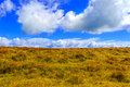 Carpathian mountains landscape, yellow grass on the hill under bright blue sky with clouds, Ukraine. Royalty Free Stock Photo