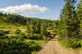 Carpathian mountains next to dragobrat ukraine summer Stock Photos