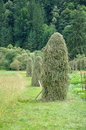 Carpathian mow green hay in ukrainian Royalty Free Stock Image
