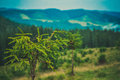 Carpatian mountains the part of ukrainian nature carpats ukraine nature forest focus beauty nature Royalty Free Stock Photo