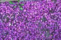 The carpet is a flower meadow Royalty Free Stock Photo