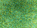 Carpet a green background texture Stock Photo
