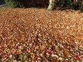 Carpet of Leaves in Autumn in November Royalty Free Stock Photo