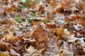 Carpet of leaves on the ground in autumn Royalty Free Stock Photo