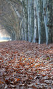 Carpet of leaves trail under trees totally covered with Stock Image