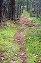 Carpeted hiking trail