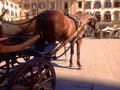 Carriage in florenze signoria square florence italy Stock Photography